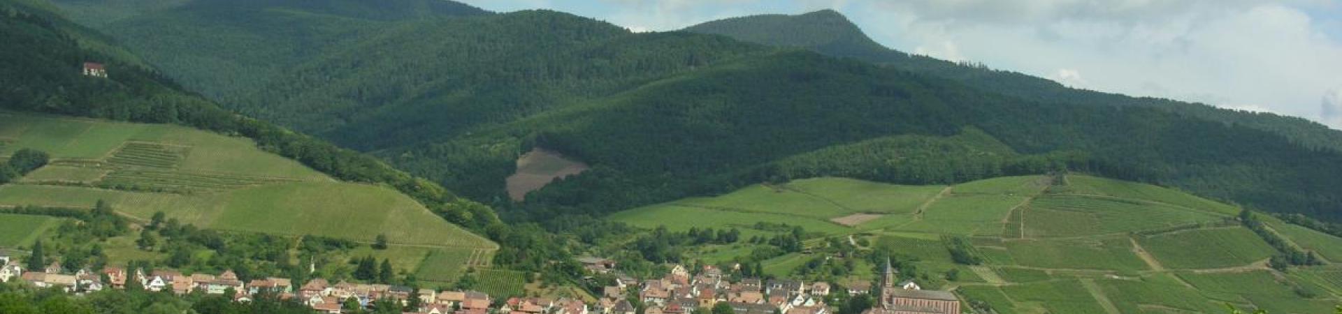 Nos vins d'Alsace